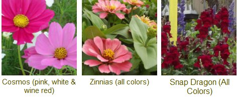 cosmos, zinnias and snap dragons