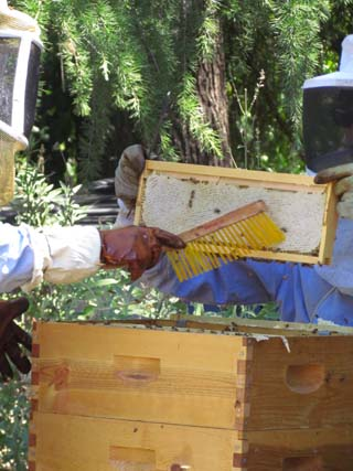 Gently brush away the bees
