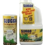 Earth and pet friendly Sluggo! The base ingredient of Sluggo is naturally occurring Iron Phosphate that does a great job of controlling snails and slugs in the garden while not harming other creatures including pets and people; and as it breaks down it actually nourishes the plants.