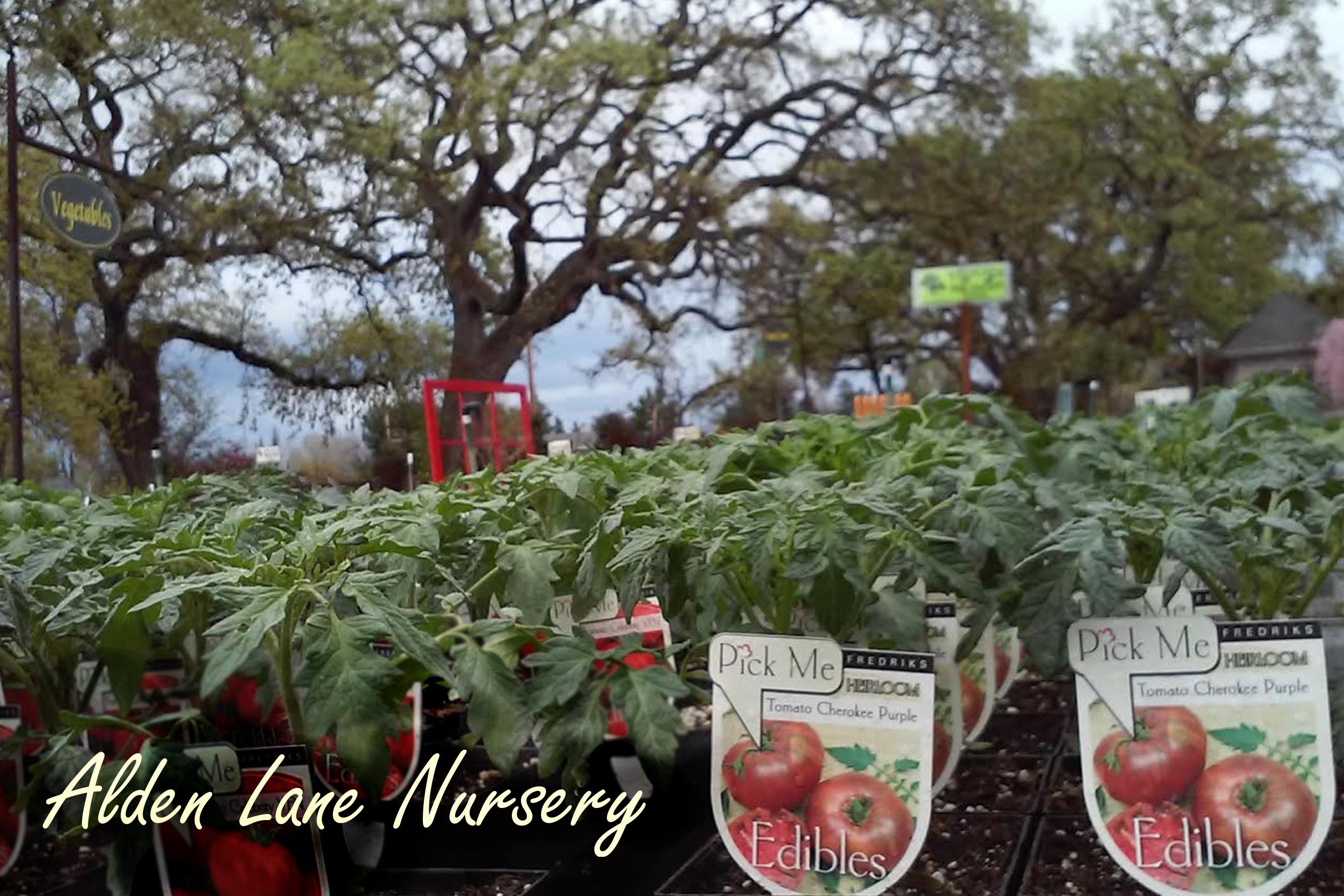 Alden Lane Tomatoes Le
