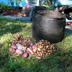 fabric-pot-potato