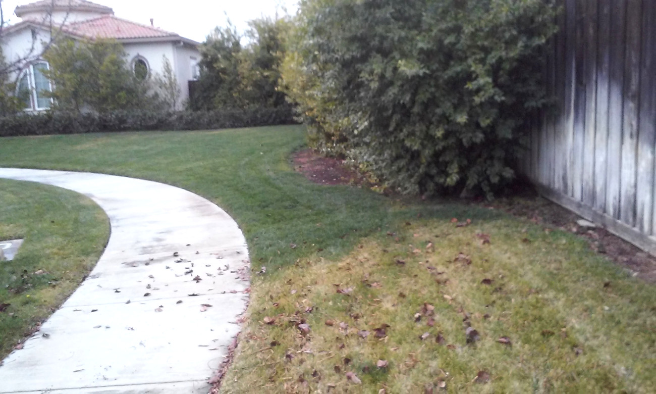 Fertilize Your Lawn Now But Reseed In Spring Or Fall