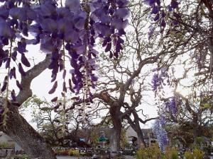 wisteriagreenhouse