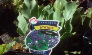 status-fredricks