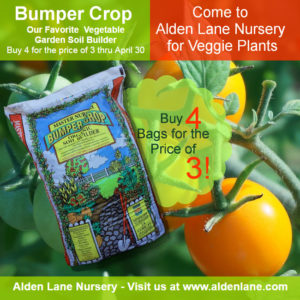 April Vegetable Guide Alden Lane Nursery
