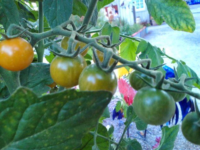 Vegetable Gardening Made Easy Alden Lane Nursery